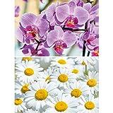 GREAT ART 2er Set XXL Poster Blumenmotive Wandbild Dekoration Orchidee & Margarite - Bild Wallpaper Foto-Poster Wanddeko Wand-Poster (140 x 100cm)