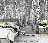 awallo Fototapete «Birkenwald» in Grau, Schwarz, Weiß | Vliestapete 336x260cm | XXL Bild-Tapete Wand-Bild Digitaldruck